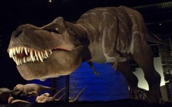 En årelang paleontologi-debatt kan være avsluttet: Forskere mener de har funnet avgjørende bevis for at Tyrannosaurus rex drepte sitt eget bytte. (Foto: Landahlauts/Flickr Creative Commons)