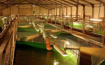 Avfallsstoffer fra landbasert fiskeoppdrett kan utnyttes som en ressurs. (Foto: Geir Helge Johnsen)