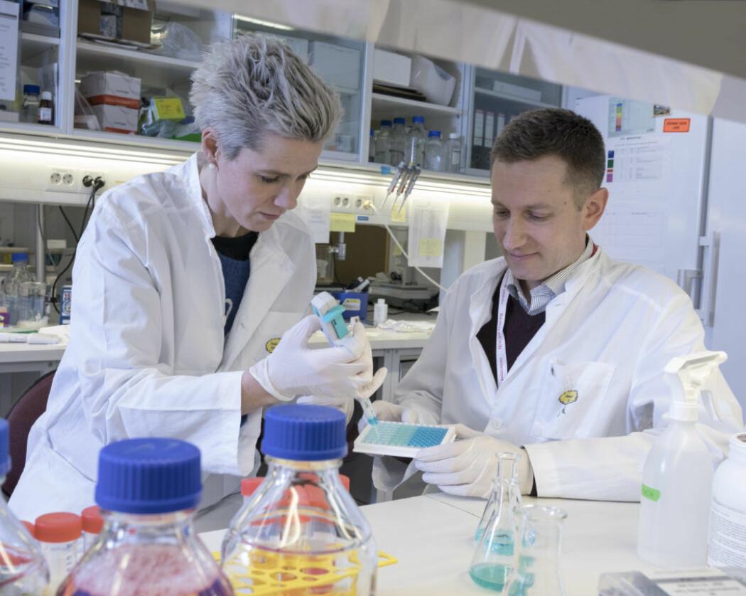 En liten forskningsvirksomhet i Bergen kommer kanskje store internasjonale legemiddelselskaper i forkjøpet med en pille som fungerer mot covid-19.