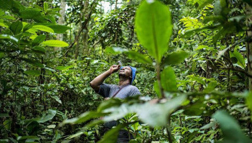 Når mobiltelefonen sprer seg i nabolaget, kan alle være med på å overvåke regnskogen. Men det er krevende å samle og dele dataene. Cifor