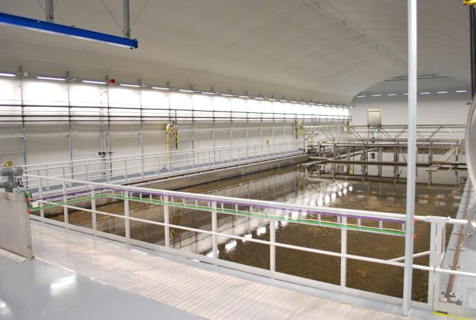 Kvernevik renseanlegg er ett av fem anlegg som HI-forskerne har fått kloakkprøver fra.