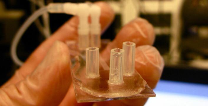 Dette er en prototype av diagnostiserings-chipen. Den er av plast og på størrelse med et kredittkort. (Foto: Jason Beech)