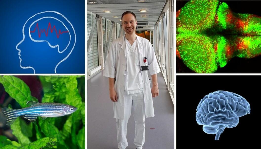 Sverre Myren-Svelstad (midten) forsker på hjernesykdommen epilepsi. Han bruker sebrafisk (nederst til venstre) i forskningen sin. Hjernene til fiskene på laboratoriet er selvlysende (øverst til høyre).