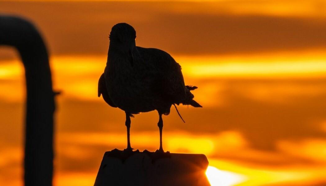 Morgenstund på Haltenbanken. Foto: Alexander Eeg / Havforskningsinstituttet