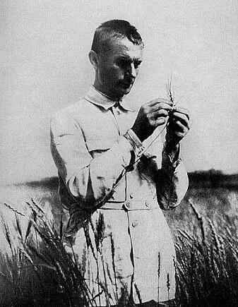 Trofim Lysenko ute i åkeren. Hans teorier førte til fullstendig kollaps og hungersnød i Sovjetunionen.