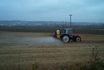 Innen korndyrking har bruk av glyfosat økt sammen med redusert jordarbeiding de siste åra. (Foto: Marit Almvik)