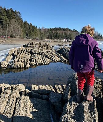 Skiver av gammel havbunn ligger på skeive ved Moelv, nord for Hamar.