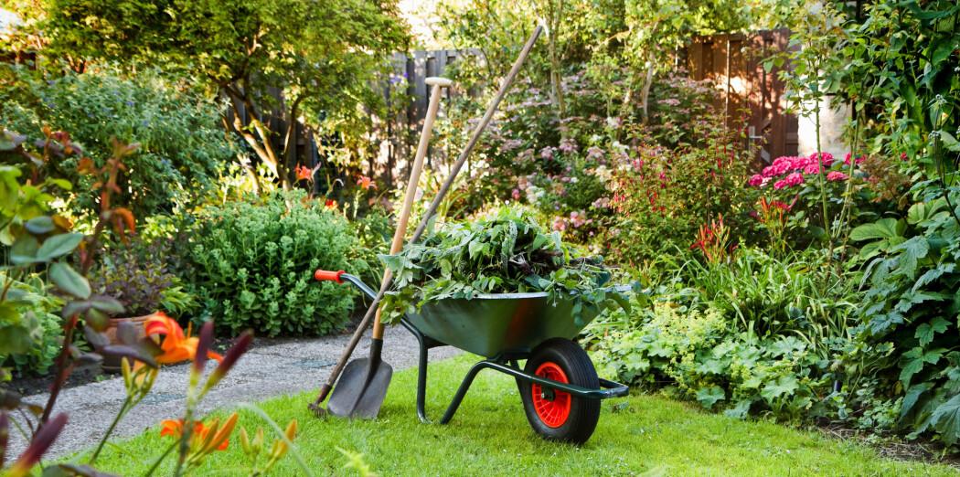 Om du vil være klimavennlig, er jorda du bruker viktigere enn plantene i hagen din.