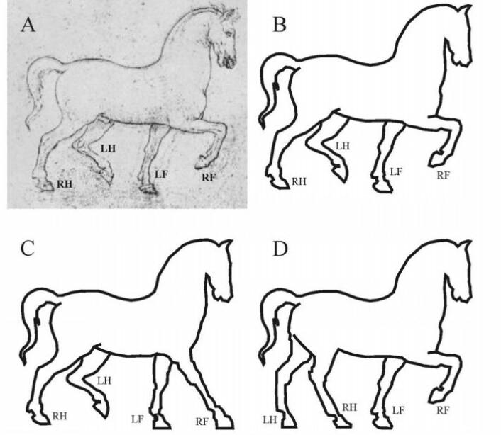 Skisse A (gjengitt i B) er tegnet av Leonardo da Vinci. C og D viser hvordan hesten kunne være gjengitt korrekt. (Foto: Gabor Horvarth)