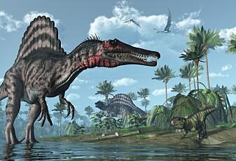 Kunne verdens største kjøttspisende dinosaur svømme?