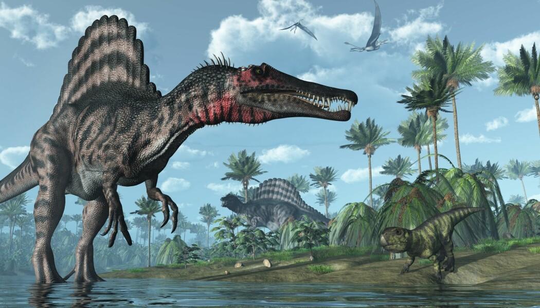 Spinosaurus lusket ikke bare rundt i vannkanten. Den kunne svømme og fange fisk i vannet. Det mener forskere bak en ny studie.