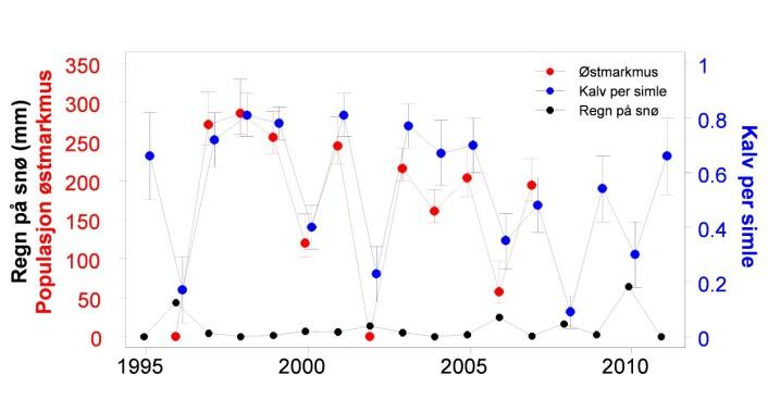 Opp og ned samtidig. Antallet østmarkmus og kalv per reinsimle svinger i takt med mengden regn som faller på vinteren på Nordenskjold Land på Svalbard. (Foto: (Figur: Fuglei & Stien))