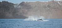 Korsong avslører kval i Antarktis