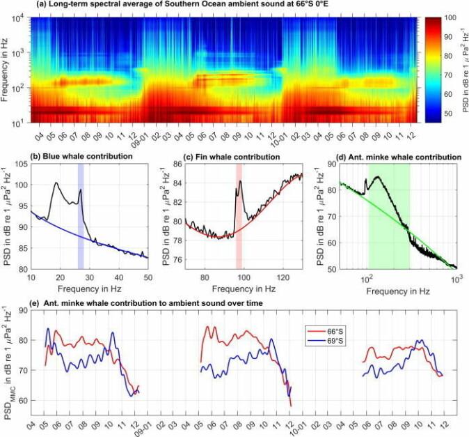 Forskarane finn ut korleis dei ulike sjøpattedyra bidrar til det store «lydlandskapet» i Sørishavet.