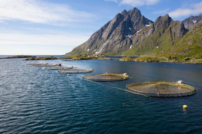 Norge er verdens ledende nasjon på lakseoppdrett. Klimaforandringene fører til varmere hav som truer dyrevelferd og oppdrettsnæring.