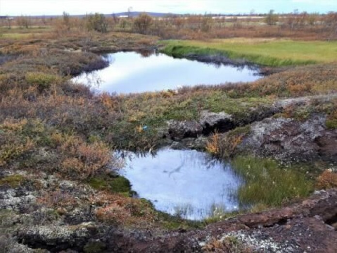 Tinende permafrost og termokarstprosesser har dannet dammer i dette torvlandskapet i Nord-Norge. Den lille dammen i forgrunnen er bare noen måneder gammel, mens den andre har vokst betydelig i løpet av de siste fire årene.