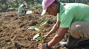 –Treplanting er ingen enkel løsning på klimaendringene