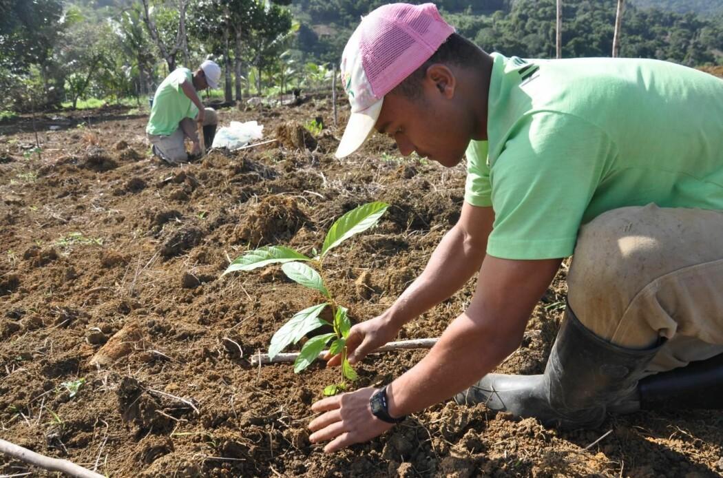 – Det er veldig tilfredsstillende å gå ut og plante et tre i jorda. Men det bør gjøres med omhu, sier forsker.