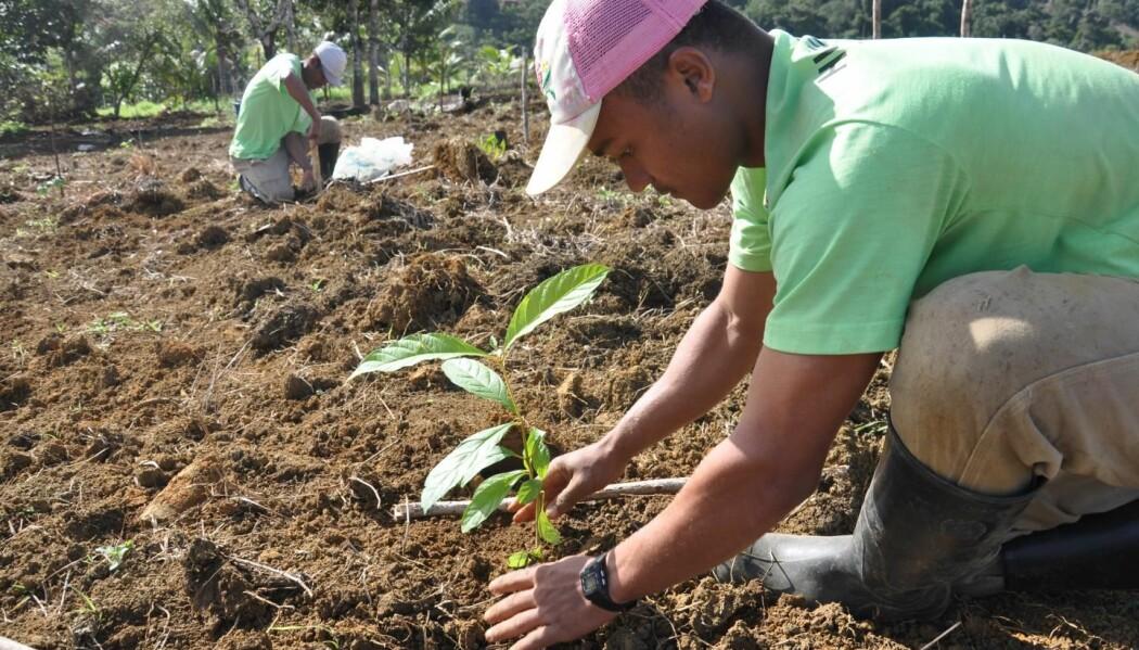 – Det er veldig tilfredsstillende å gå ut og plante et tre i jorda. Det er en konkret, gjennomførbar ting å gjøre. Men det bør gjøres med omhu, sier forsker.