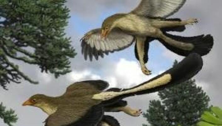 Dinosaurer lærte å fly ved å hoppe fra tre til tre