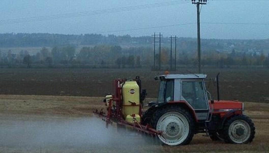 Innen korndyrking har bruk av glyfosat økt sammen med redusert jordarbeiding de siste åra. Marit Almvik