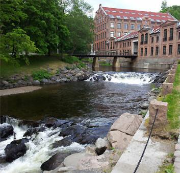 Dyrelivet i Akerselva er nesten tilbake på nivået før utsleppet for to år sidan. (Foto: Henning Pavels, NHM/UiO)