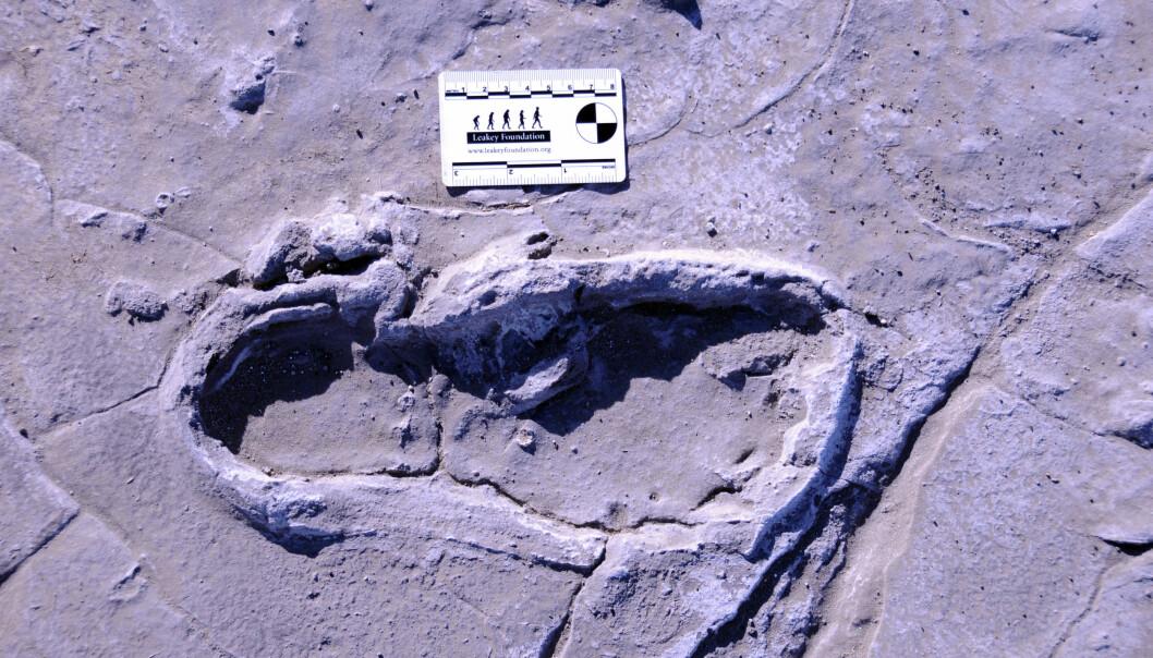 Dette fotsporet er kanskje mer enn 10 000 år gammelt, men det er svært godt bevart. En person gikk barfot her for tusenvis av år siden.