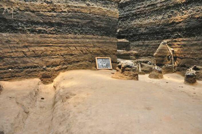 En steingammel mayavei er avdekket i El Salvador under fem meter med vulkansk aske. Veien sees her med en vannkanal til venstre og rester av  maisplanter som stikker opp til høyre. (Foto: Payson Sheets, University of Colorado)