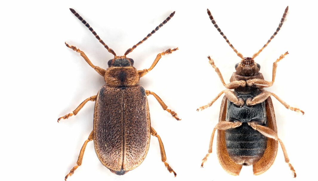 Beetle X, which was eventually incorporated into the world's biodiversity register.