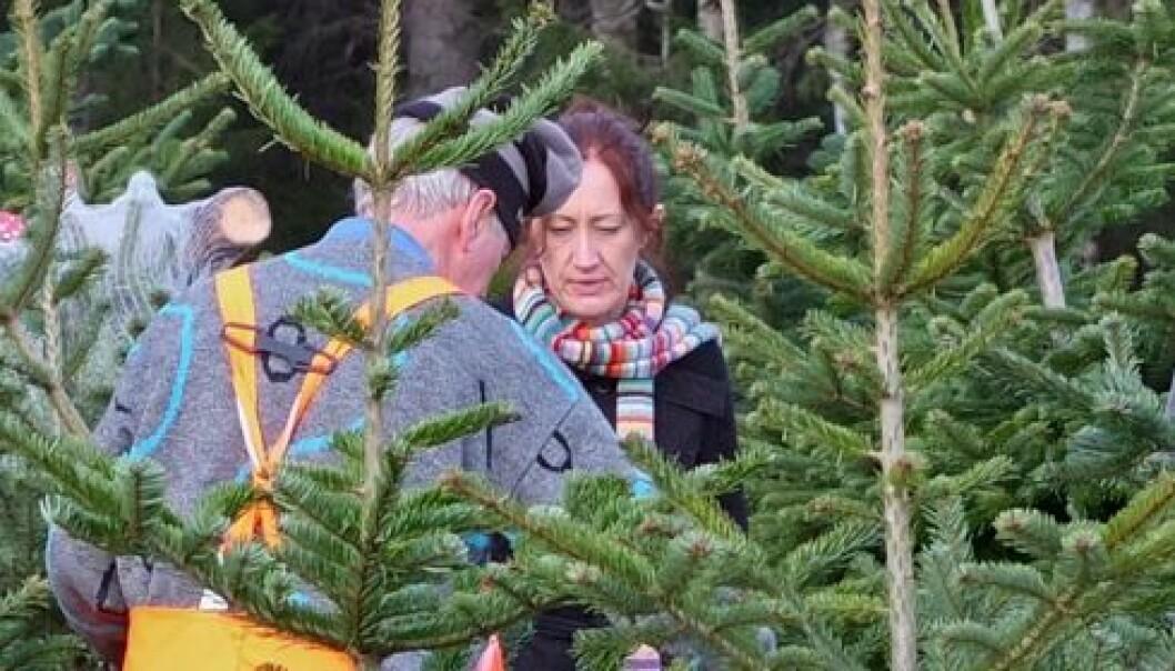 Levande juletre best for miljøet