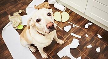 Hunder har også en «tenårings-fase»