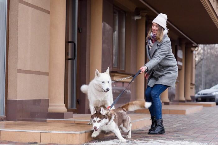 Det er ikke alltid så lett å holde styr på unghunden når det er så mye spennende å utforske i verden.