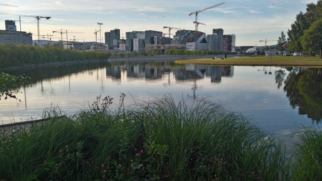 Ikke bare til pynt: Selv i grunne vannspeil midt i byen, som her i Middelalderparken i Oslo, kan det legges til rette for et yrende biologisk mangfold.