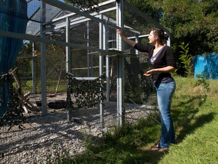 Valérie Dufour ved den ene enden av buret til kornkråkene. Hvis de vil kommer fuglene hit for å løse oppgaver. (Foto: Ingrid Spilde)