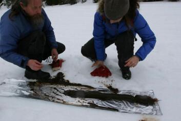 Forskerne henter bunnprøver fra en innsjø i Trøndelag. (Foto: Science/AAAS)