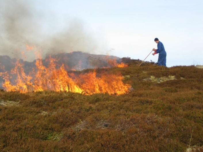 Kontrollert lyngbrenning på kysten av Vestlandet. (Foto: Liv Guri Velle)