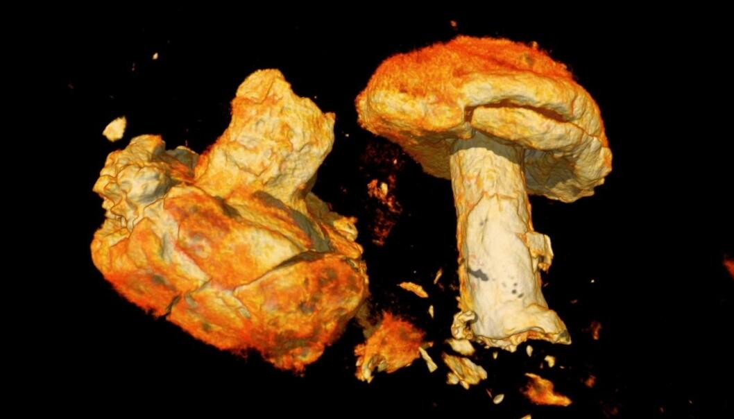 Dette er en CT-scan av naglene som satt i bordgangene i Gjellestad-skipet. Det ser ut som sopp, men er altså nagler.
