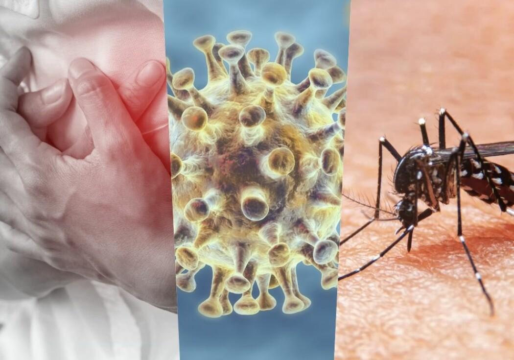 Hjertelidelser, covid-19 og malaria. Hvor mange dør av hva?