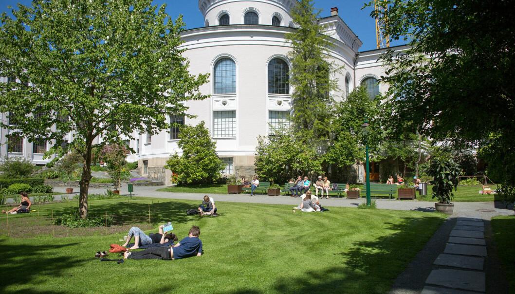 UiB har blitt med i en internasjonal allianse i innsats for klima. Bildet viser hagen foran Universitetsmuseet i Bergen.
