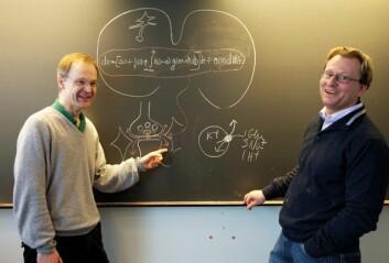 Medisinprofessor Niels Christian Danbolt har bedt matematikkprofessor Kenneth H. Karlsen om hjelp til å modellere signalkaoset i hjernen. (Foto: Yngve Vogt)