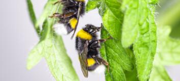 Sultne bier fikk plantene til å blomstre