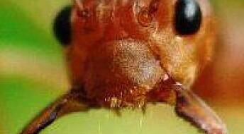 Gå til mauren og bli klok