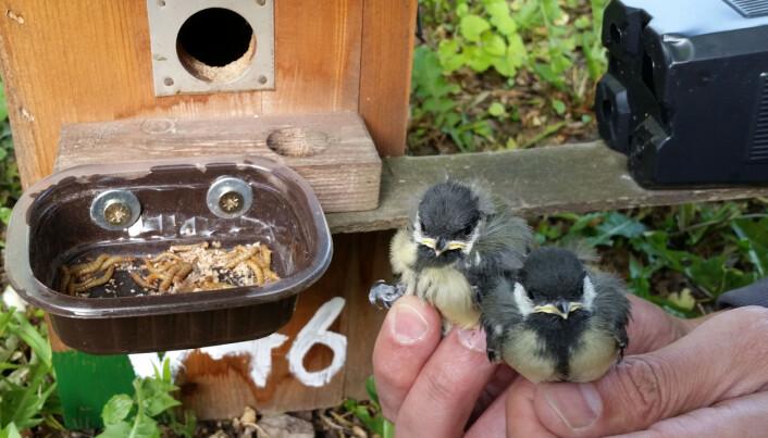 Slik rigget forskerne seg til utenfor fuglekassene.