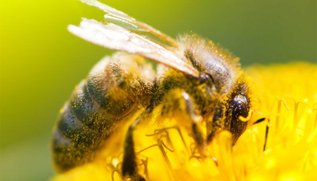 Bier uten høyre antenne kan ikke skille venn fra fiende