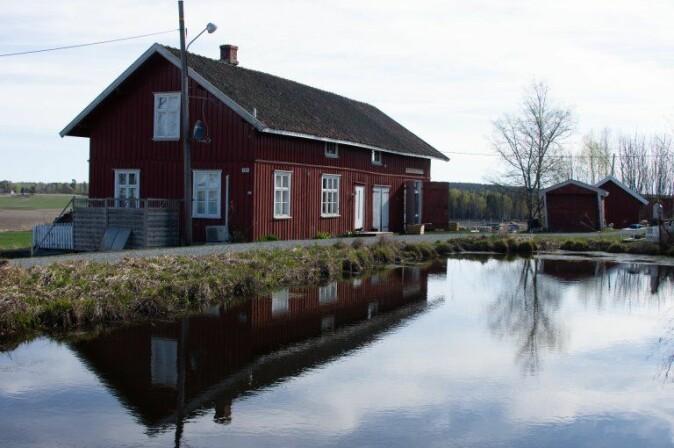 Gardsdammar i jordbrukslandskapet er viktige leveområde for salamandrar i Noreg.