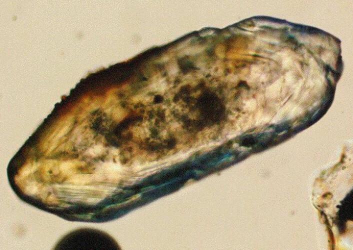 Små korn av mineralet zirkon brukes ofte til uran-bly-datering. (Foto: Wikimedia Commons)