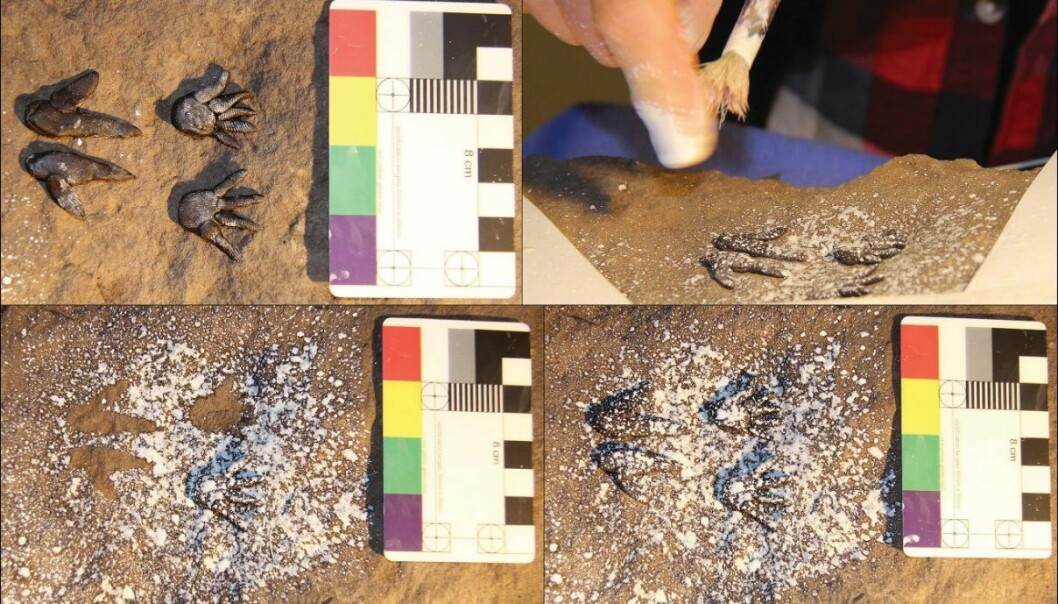Prosessen med å kopiere et av hulebildene, som var noen små dyrespor.