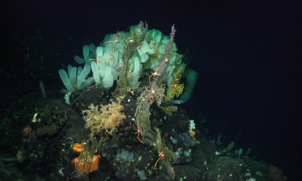 På havets dyp, mellom 200 og 1000 meter under overflaten, lever det mange sårbare arter som påvirkes av temperaturendringer,