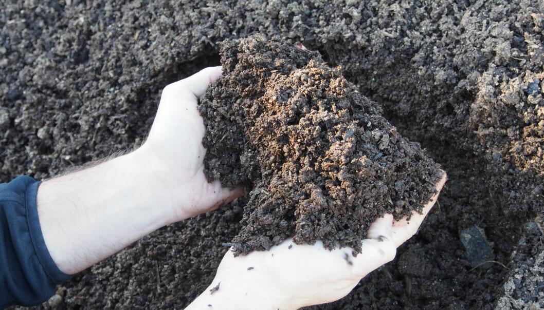 Kompost er organisk materiale, fra planter eller dyremøkk, som er brutt ned av mikroorganismer. Disse prosessene gjør næringen i komposten tilgjengelig for nye planter.