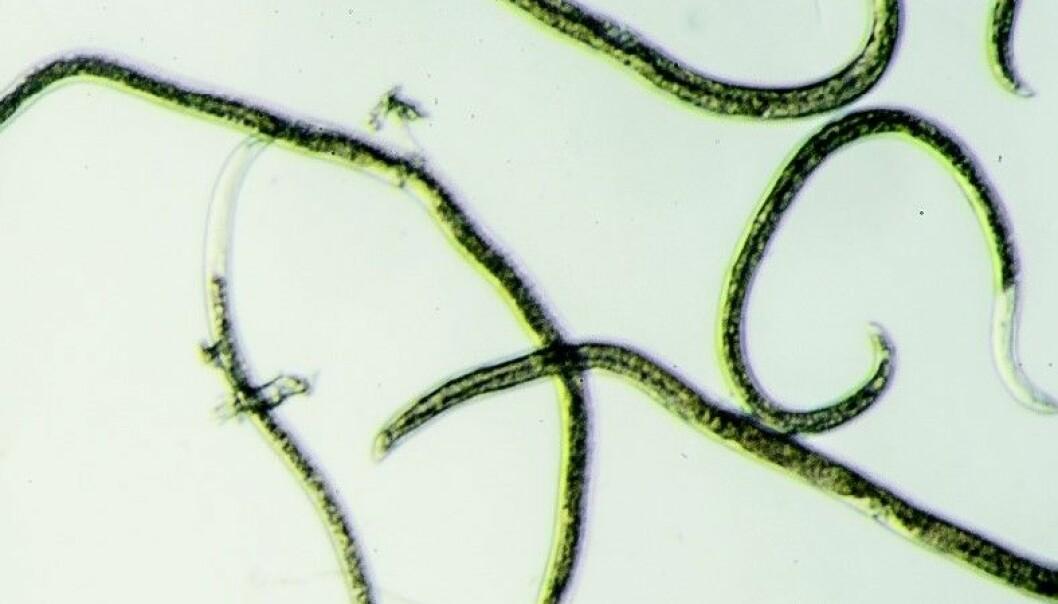 bioforsk